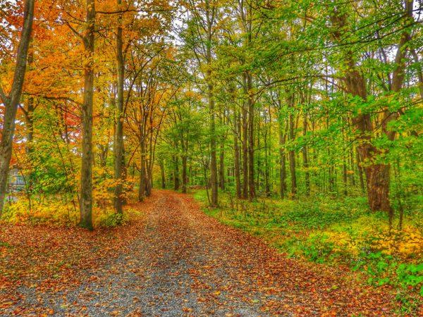 canada-colori-autunno