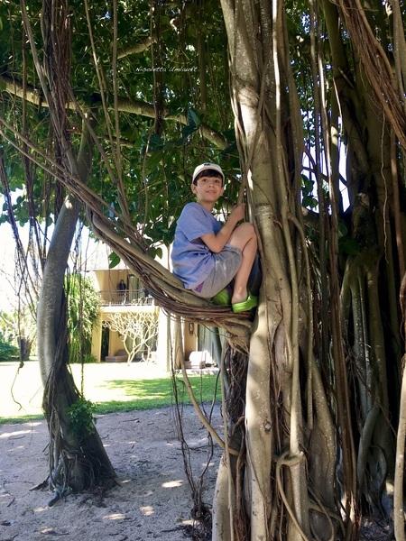 Lorenzo on the Banyan tree Trou aux Biches