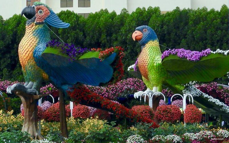 Parrots at the Miracle Garden Dubai